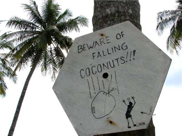Малайзия: Опасайтесь кокоса!