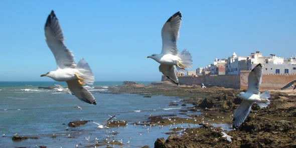 morocco_guls