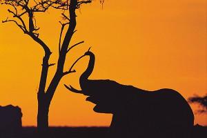 Лучшие национальные парки Танзании