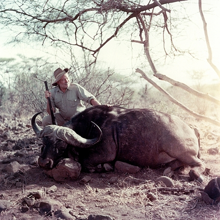 Ernest Hemingway poses with a water buffalo while on safari in Africa, 1953-1954