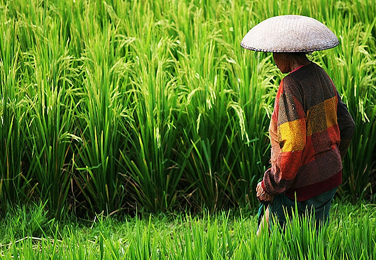 Индонезия: В деревню? На Бали... В Санур!