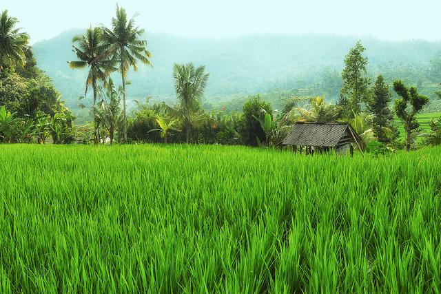 Индонезия в деревню на бали в санур