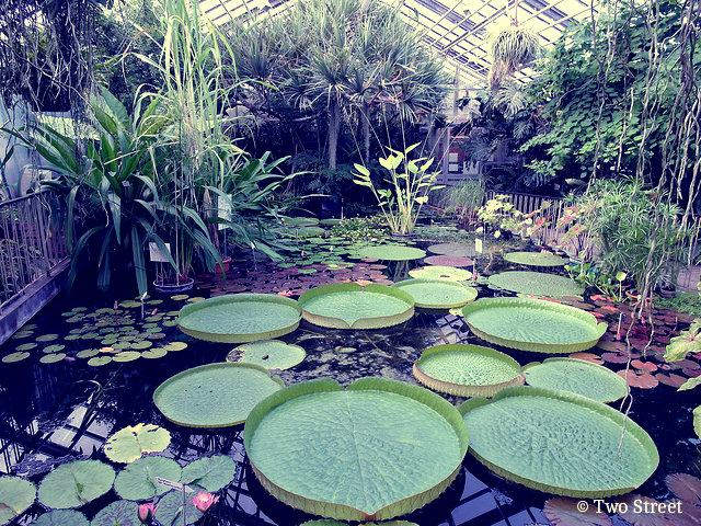 ботанический сад йена