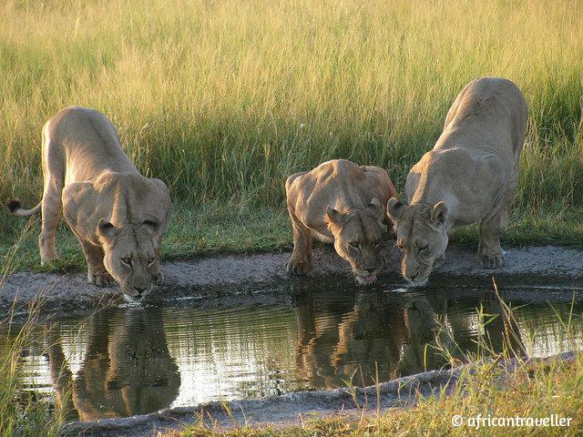 Ботсвана_Central Okavango Delta