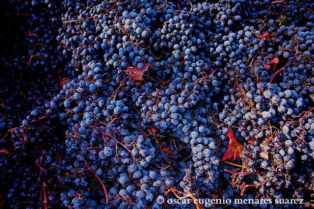 Chilean wine 2