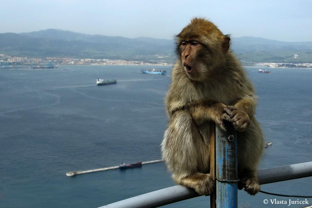 пупешествие на Гибралтар