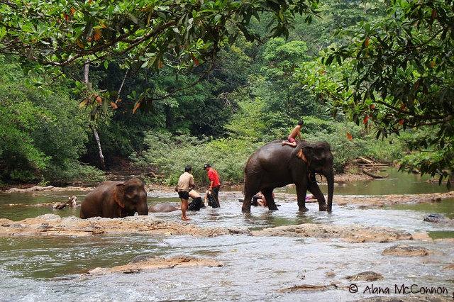 кам_слоны