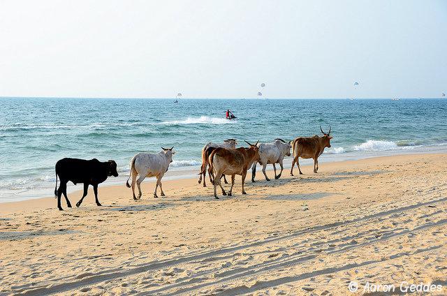 Индия: Go Goa!