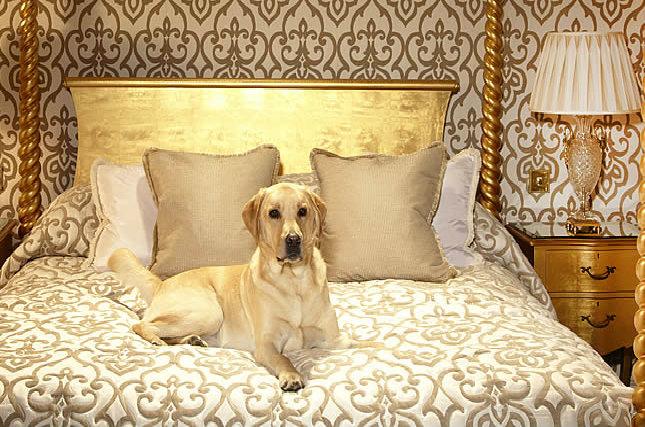 Лучшие отели для отдыха с животными