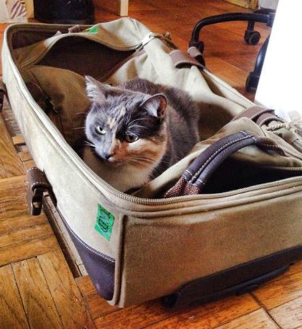 Dusiko личный опыт путешествие с котами