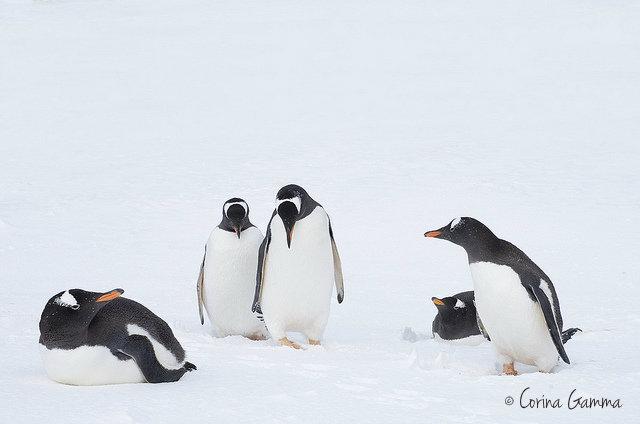 свадьба а Антарктике